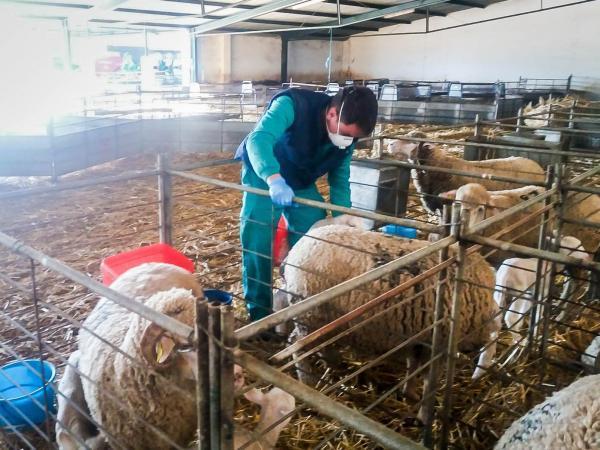 La Diputación de Badajoz garantiza el cuidado de animales y plantas manteniendo servicios mínimos en el Vivero Provincial y la finca La Cocosa