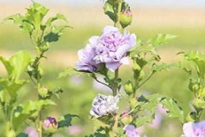 Imagen de la noticia: Comienza la campaña de suministro de plantas en f ...